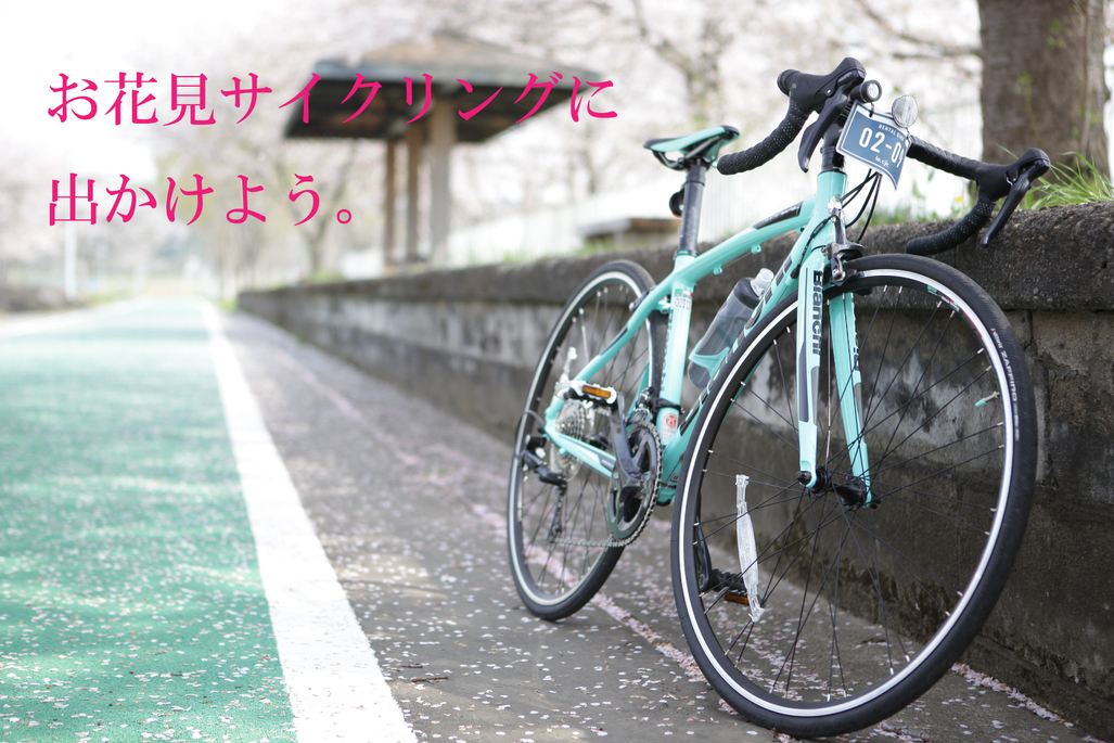 Let's go for cherry blossom viewing cycling this spring!